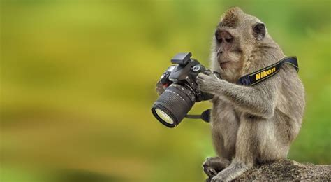 best wildlife photography 22 best award winning wildlife photography stunning