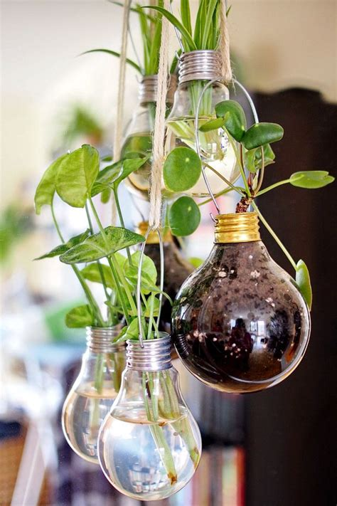 Light Bulb Planter Diy by 17 Best Ideas About Hanging Light Bulbs On