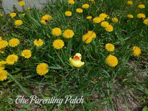 dandelion rubber st the duck and the dandelions the rubber ducky project week