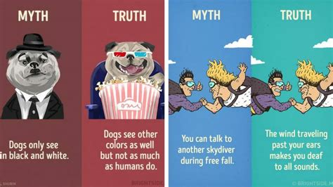 what dogs see what can our dogs see the truths and the myths viral fancy