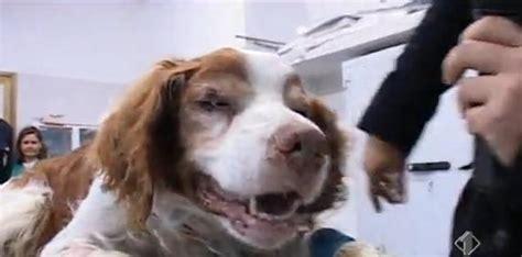 mediaset cafã v italiji odkrili psa ki je so ga pokopali živega tv