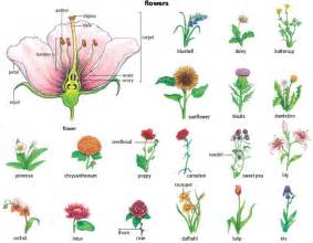 Flower noun definition pictures pronunciation and usage notes