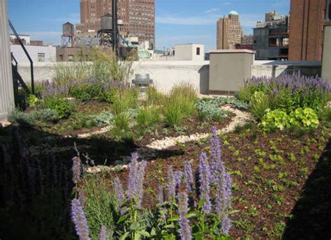 norquist green roof send us photos of your green roofs