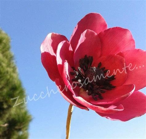 anemone edible 17 best images about fondant anemones on pinterest