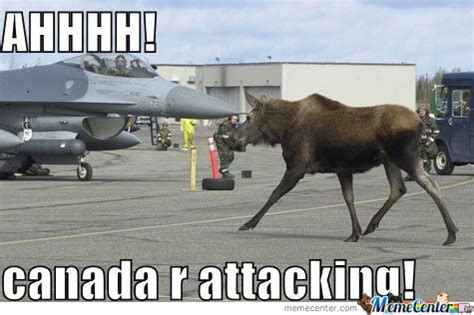 Canadian Moose Meme - canadian political memes canadian pinterest people