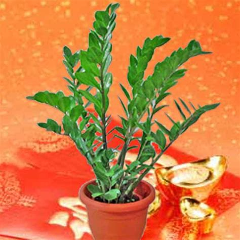 new year plant decorations singapore new year plant new year plants delivery