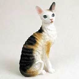 most popular cat breeds that don t shed a lot melpomene org