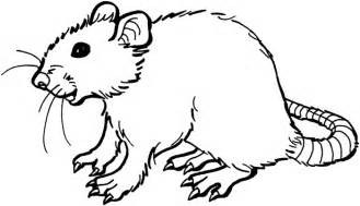 Rat skull coloring pages