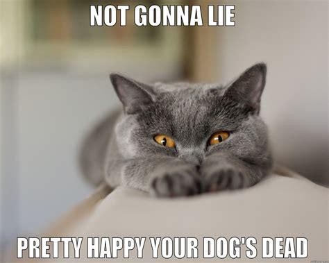 Sassy Cat Meme - sassy cat quickmeme