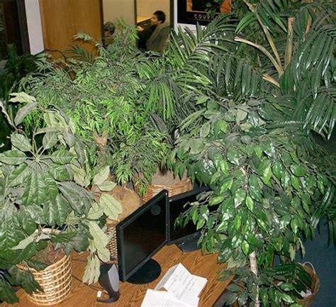 cubicle plants this cubicle has a lot of plants office pranks pinterest