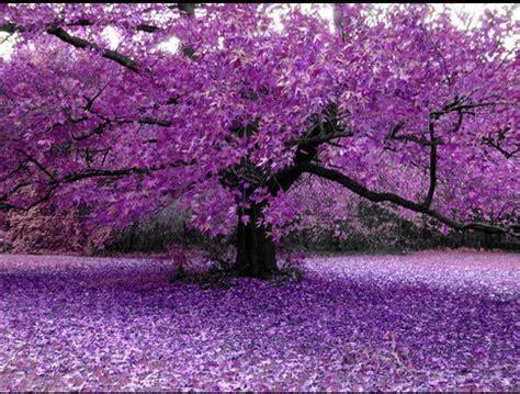 purple tree imt wellness center