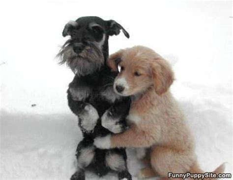 hug puppy dogs hugging funnypuppysite