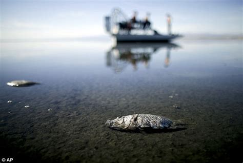 heyday boats california 400 million plan to stop salton sea drying up revealed