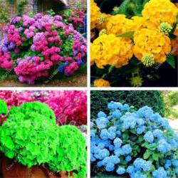 hydrangea colors popular color hydrangea buy cheap color hydrangea lots