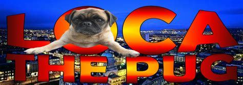 loca the pug that couldn t run loca the pug about