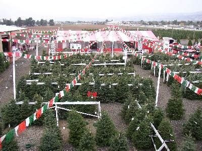christmas tree cutting ranch near san antonio battaglia ranch tree farm 95046 san martin 13580 murphy ave