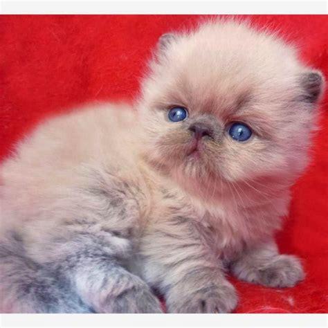 imagenes tiernas de gatos imagenes tiernas de perros y gatos felinos fondos de