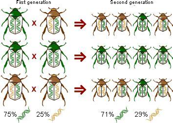 plant life genetic drift