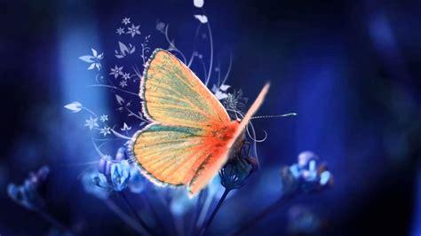 imagenes mariposas volando para hi5 significado de so 241 ar con mariposas youtube