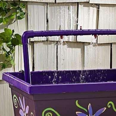 shower instead of bath apparently hummingbirds like to shower instead of bath
