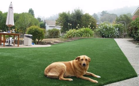 artificial tears for dogs artificial or synthetic grass for run areas