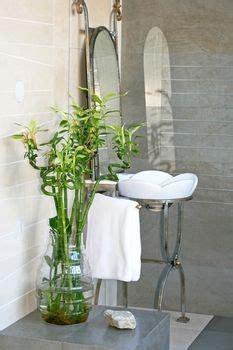 plants for windowless bathroom best 25 lucky bamboo plants ideas on pinterest feng