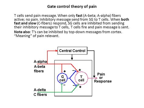 define pattern theory of pain chapter 13 touch touch the skin based receptor system