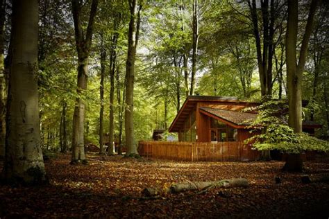 Forest Cabins by Blackwood Forest Cabins