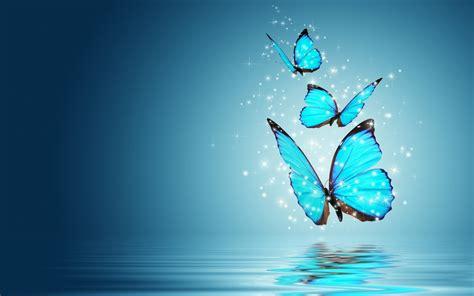imagenes de mariposas blancas volando banco de imagenes y fotos gratis wallpapers de mariposas 3