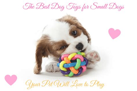 best puppy toys the best toys for small dogs your pet will to play 2017