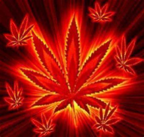 imagenes perronas de mota cannabis