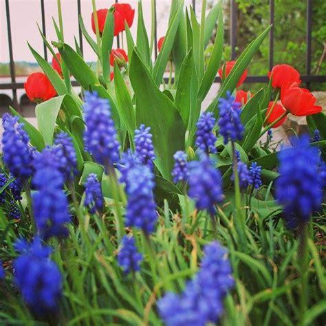 blaue und rote küche eine farbstarke kombination f 252 r den garten rote tulpen