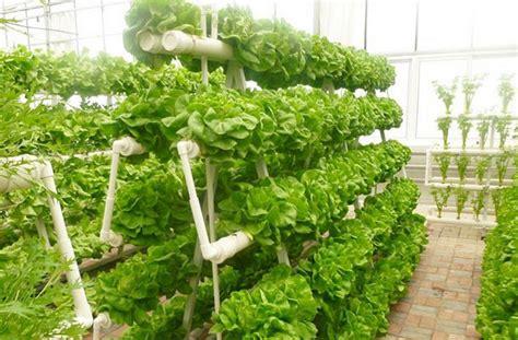 best 25 vertical hydroponics ideas on