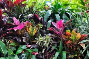 colorful plants colorful tropical plants up stock photo colourbox