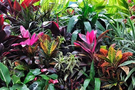 tropical plant species colorful tropical plants up stock photo colourbox
