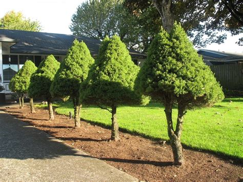 decorative trees for the home trees for the landscape