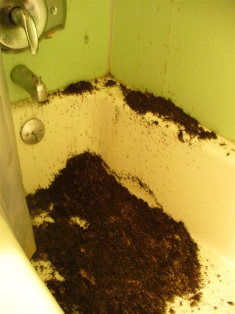 ants in bathtub 20 weird creepy and nasty things people have come across