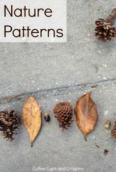 pattern in nature pdf lines of symmetry worksheets lines of symmetry worksheet