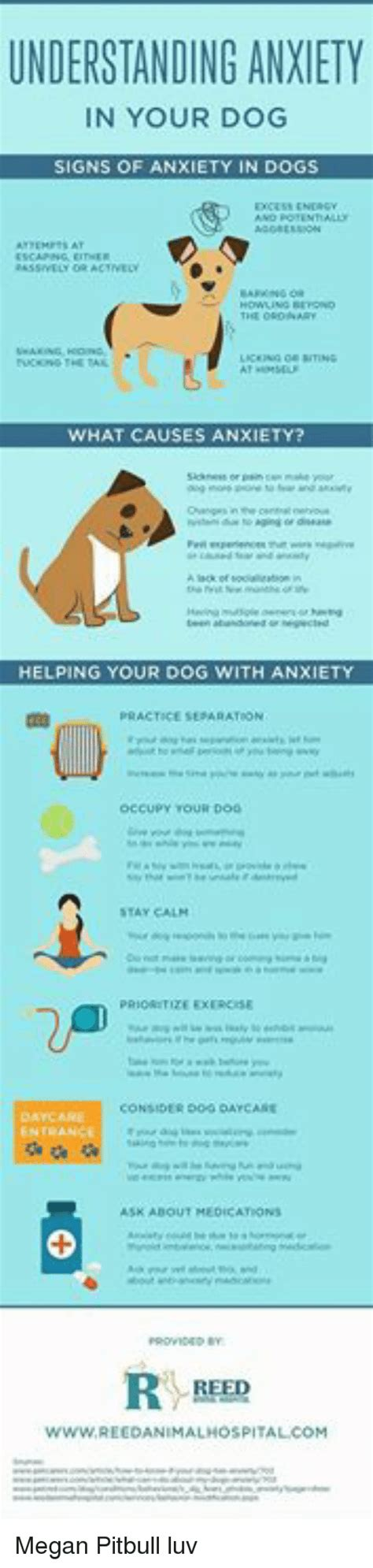 signs of anxiety in dogs understanding anxiety in your signs of anxiety in dogs actvey what causes anxiety