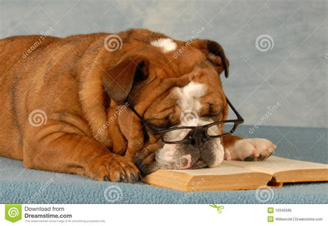 puppy obedience school obedience school royalty free stock photo image 10340585