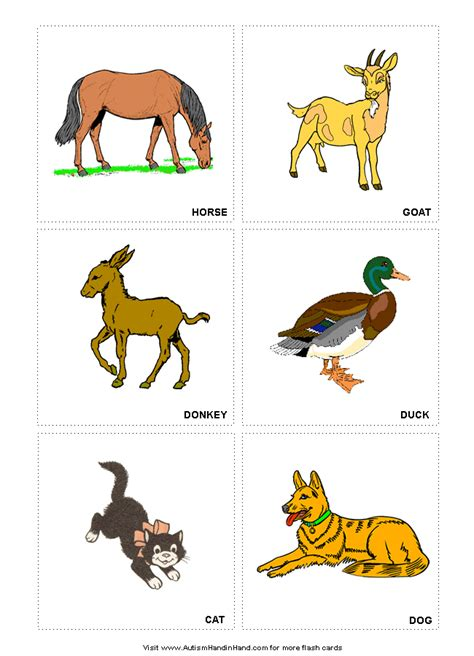 wild animal printable flash cards flashcards  learning