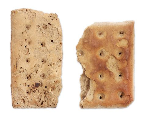 The Civil War Parlor   Civil War Hardtack Crackers Two pieces of Civil