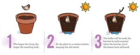 coltivare lattuga in vaso come coltivare frutta e verdura in casa partendo dagli