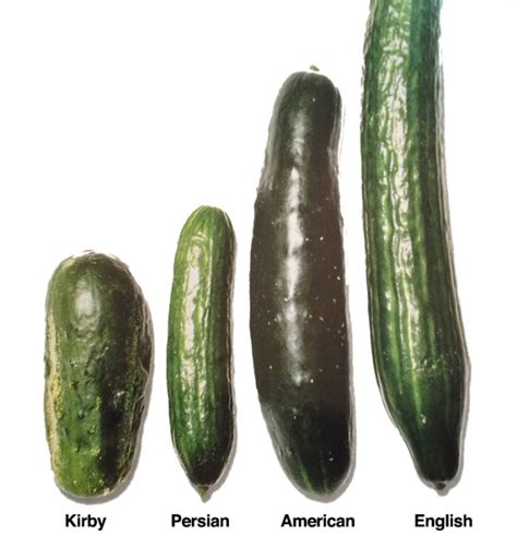 cucumbers all types and how to use them gourmet kosher cooking