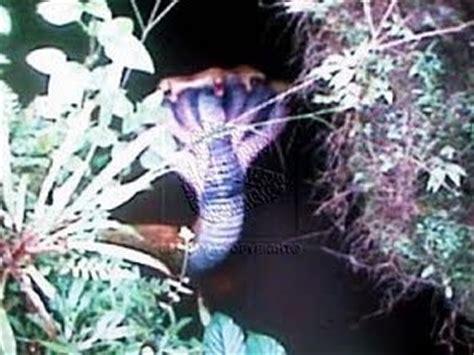 film ular berkepala 7 koleksi cerita ular banyak kepala blog buruk