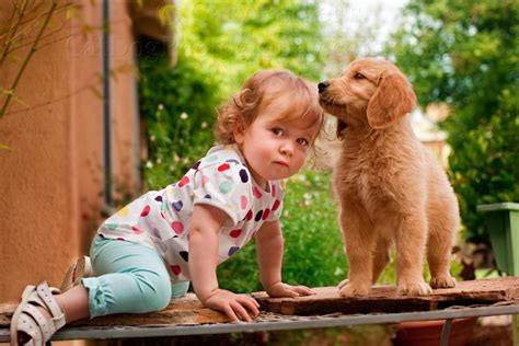 golden retrievers and children your children and golden retrievers