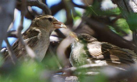 love birds may 26 2012 baby birds feeding