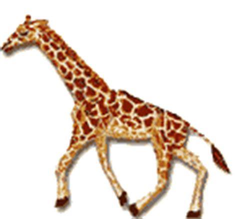 imagenes animadas de amor gif gif jirafa caminando gifs e im 225 genes animadas