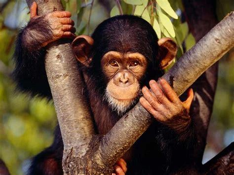 animales vertebrados donde viven como nacen donde viven los monos que comen como nacen