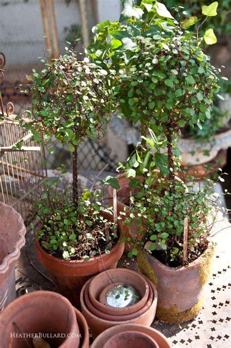 vine topiary vine topiaries boxwood gardens in